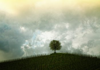 Vague de froid: quelles conséquences sur les vignobles